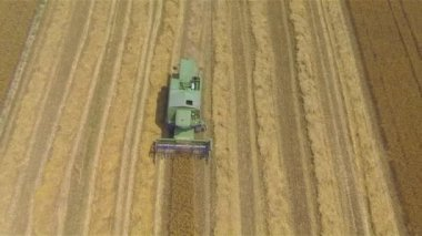 Combine harvesting crop on a field — Stock Video