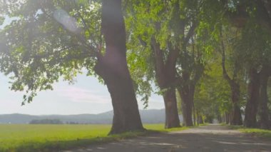 Tree avenue — Stock Video