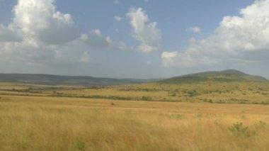 Amazing Kenyan safari — Stock Video