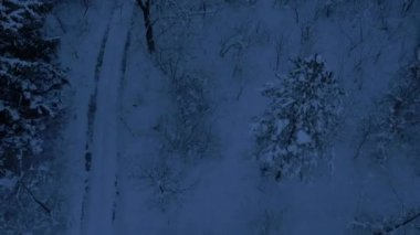 Foresta invernale innevato — Video Stock