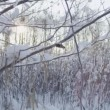 Snow falling off a branch in winter — Stock Video #68200781