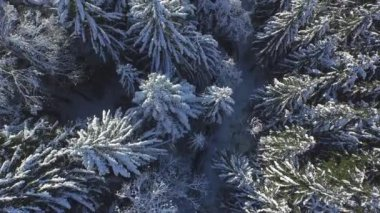 Flying directly above the snowy pine forest — Stock Video