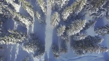 Footsteps in fresh snow leading through the winter forest — Stock Video