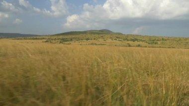 Vast meadow in Africa — Stock Video
