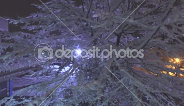 City light shining through snowy tree — Stockvideo