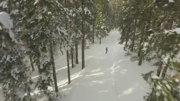 Flying above the female snowboarding through the forest — Vidéo