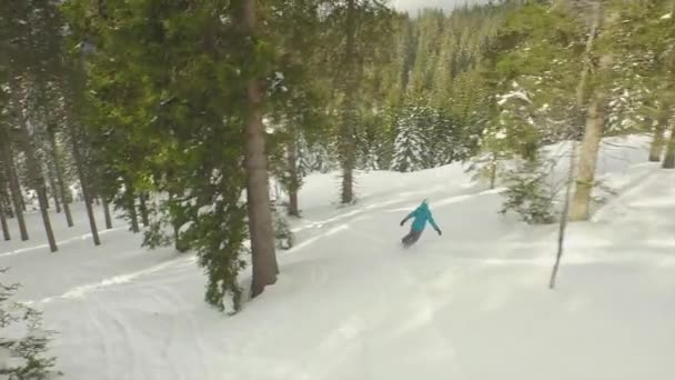 Snowboarding through a snowy spruce forest — Vidéo