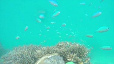 Beautiful coral garden reef — Stock Video