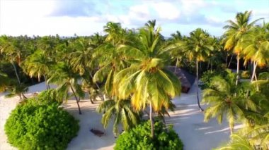 Island resort between palm trees on the beach — Stock Video