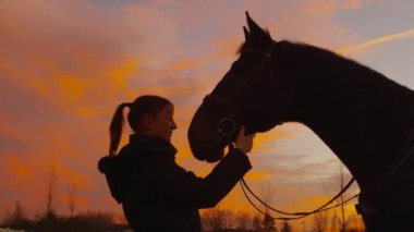 SLOW MOTION: Young woman kissing and stroking her horse — Stock Video
