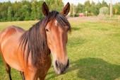 Horse on the farm — Stock Photo