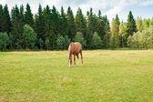 Paard op de boerderij — Stockfoto