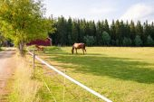 Horse and foal on the farm — Stock Photo