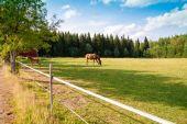 Cavalo e potro na fazenda — Foto Stock