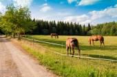 Cavalos e potro na fazenda — Foto Stock