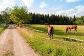 At ve çiftlikteki yavru — Stok fotoğraf
