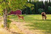 Häst och föl på gården — Stockfoto