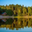 Forest reflecting in lake — Stock Photo #53982459