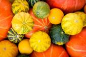 Ripe organic colored pumpkins as a background — Stock Photo