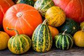 Ripe organic colored pumpkins  — Stock Photo