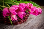 Bouquet of pink tulips in the basket closeup — Stock Photo