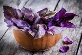 Beam of purple basil in the bowl  — Stock Photo