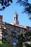 Top of Mangia Tower, Siena, Italy — Stockfoto