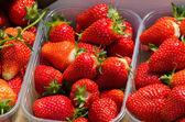 Fresh Strawberry Background — Stock Photo