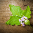 Eggplant and leaves and flower — Stock Photo #59872007