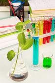 Colored chemistry liquid — Stock Photo