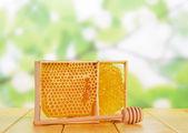 Sweet honeycombs with honey — Stock Photo