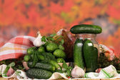 Cucumbers for marinate with dill — Stock Photo