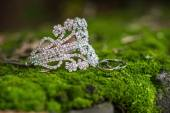 Bracelet and ring lying on the moss — Stock Photo