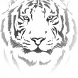Tiger head — Stock Vector #60336267