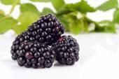 Studio shot of three fresh blackberries with leaves in background  — Stock Photo