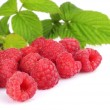 Many raspberries leaves corner template isolated white — Stock Photo #55764527
