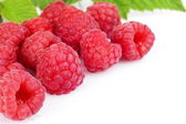 Many raspberries leaves corner template isolated white — Stock Photo