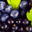 Closeup view blueberries and blackcurrants leaves background — Photo #57776005
