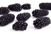 Studio shot of many fresh blackberries isolated white  — Stock Photo