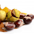 Group of many chestnuts in the corner with autumn leaves — Stock Photo #58414519