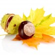 Group of many chestnuts with autumn leaves — Stock Photo #59579743