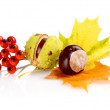 Group of many chestnuts with autumn leaves — Stock Photo #59582253