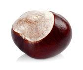 Closeup shot chestnut isolated on white background — Stock Photo