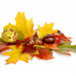 Group of many chestnuts with autumn leaves — Stock Photo #60154087