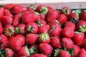 Strawberries in the wooden basket with plant — Foto de Stock