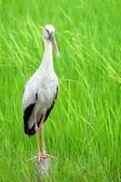 Beautiful bird standing on the wood — Stock Photo