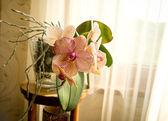Orange orchidee — Stockfoto