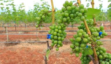 Plants growing at vineyard — Stockvideo