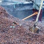 Bark of Coffee bean for make fertilizer — Stock Photo #67554229