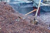 Rinde der Kaffeebohne für Dünger machen — Stockfoto